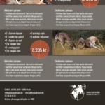 Grafisk profil til Globus Jagtrejser